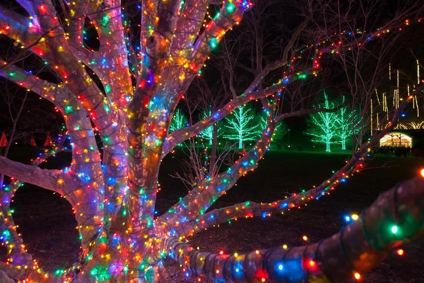 Деревья, декорированные светодиодными гирляндами, выглядят эффектно и празднично