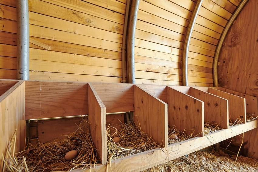 Гнезда для кур-несушек, построенные своими руками из дерева