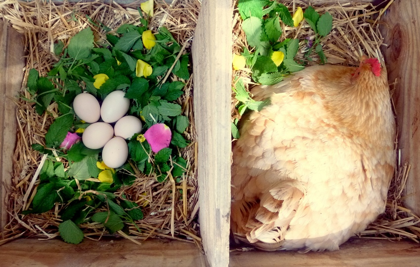 Обустраивая птичник, важно создать для птиц оптимальные жизненные условия