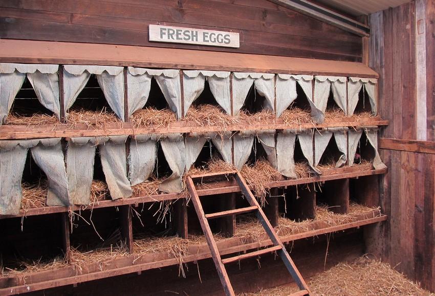Пример собственноручно изготовленных гнезд для кур с оригинальным декором