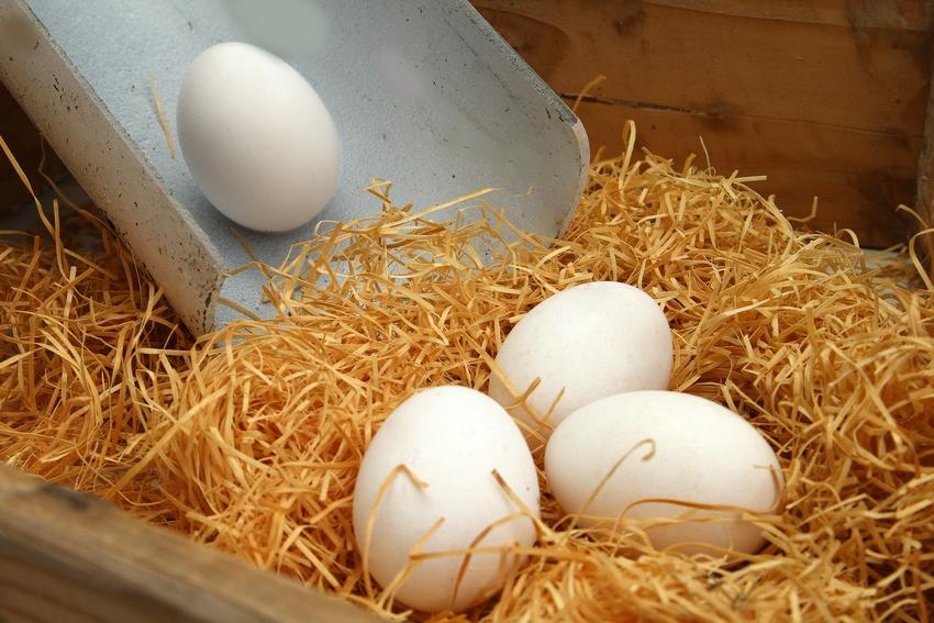 Яйцеприемник позволит сохранить яйца в целости, что особенно актуально при высоком поголовье кур
