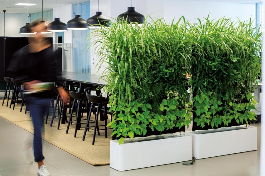 Интересно и свежо выглядит передвижная перегородка с живыми растениями