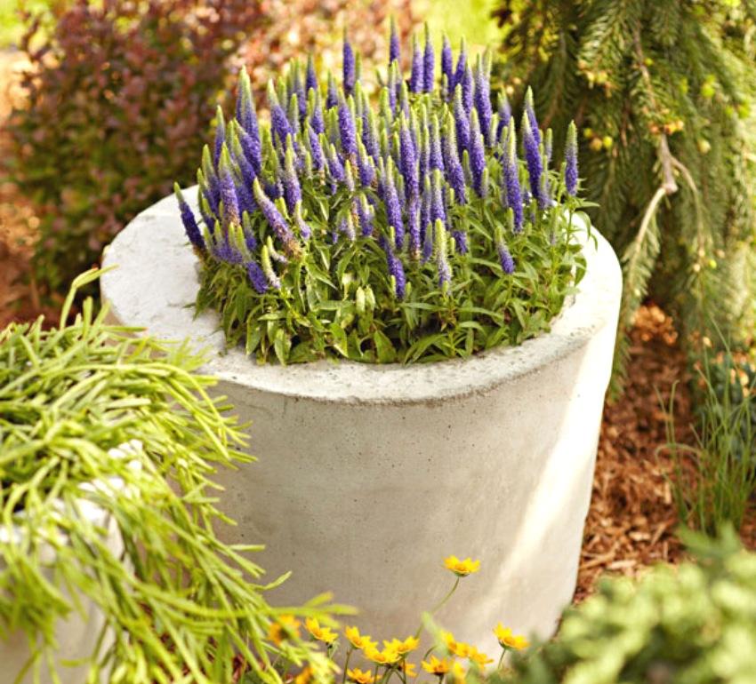 Шаг 7: готовый вазон размещается на участке и в него высаживаются растения