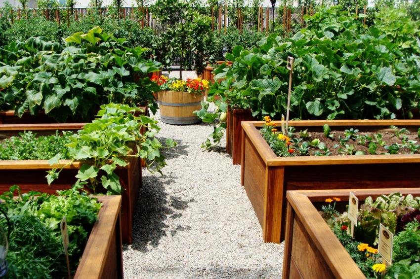 Самый простой способ украсить тропинки для огорода - засыпать мелким гравием