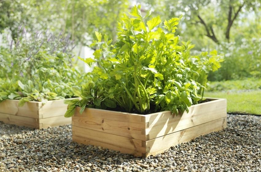 Многолетние растения можно высаживать в отдельные ящики, что упростит работу с ними на следующий год