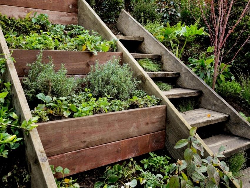 Высокие склоны также можно использовать для посадки плодоносных растений и приправ
