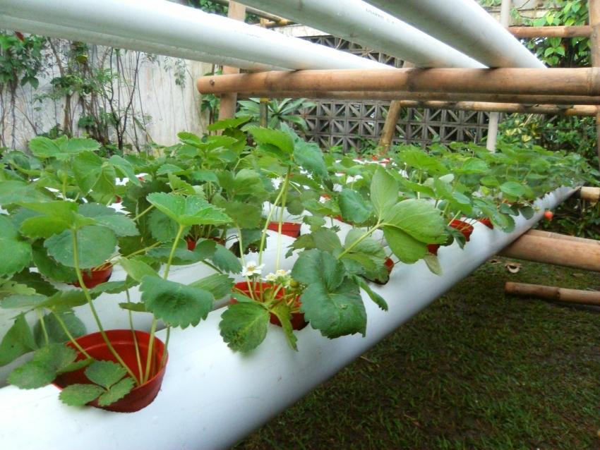 Для горизонтального выращивания клубники в трубах необходимо позаботится о системе полива, для этого необходим встроенный шланг и вода под напором