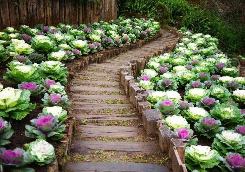 Красивая дорожка сделает огород не только привлекательным но и удобным в уходе