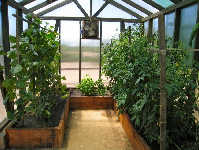 Высокие грядки очень удобны для маленьких теплиц — это позволяет выращивать разные растения рядом