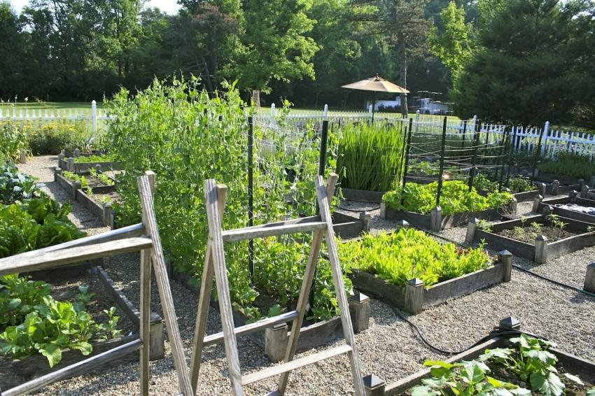 Для достижения максимальной урожайности, планировать и менять посадку растений необходимо каждый год