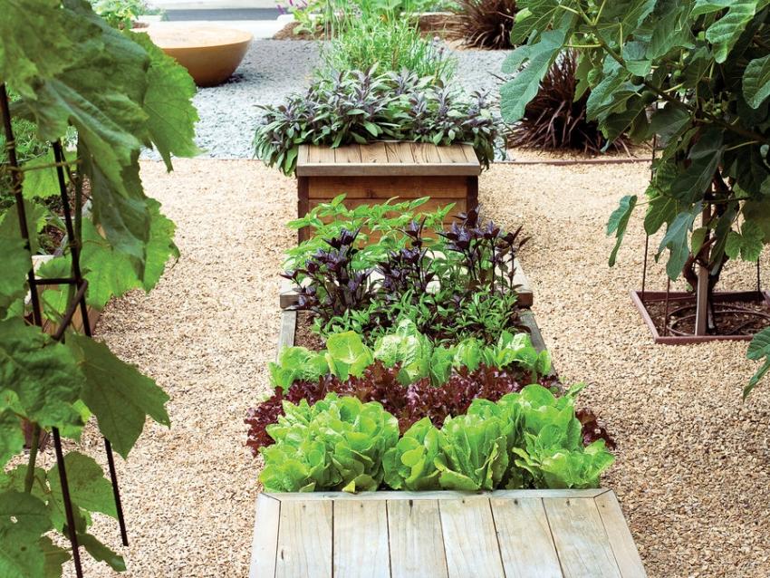 Как красиво сделать сад в огороде фото