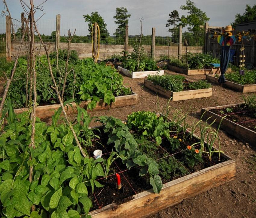 Сад и огород своими руками ютуб 75