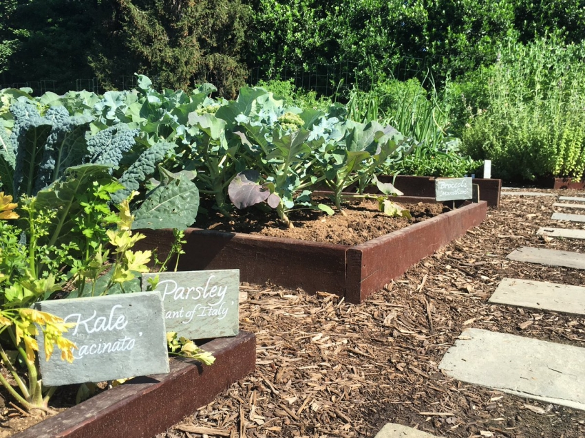 Правильно совместив овощные культуры можно избежать заражения растений болезнями и вредителями
