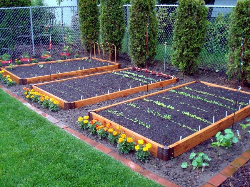 Выращивание огорода 48