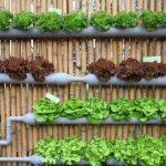 Красивые грядки на даче своими руками: фото примеры и необычные решения