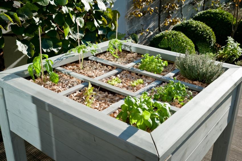 Пример одного из методов зонирования площади грядки для разных растений
