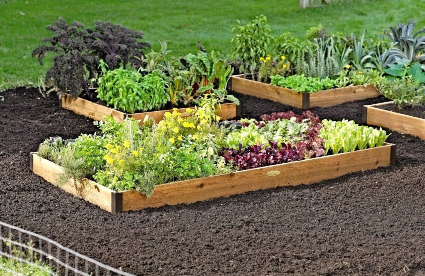 Самый красивый огород на даче своими руками фото 5