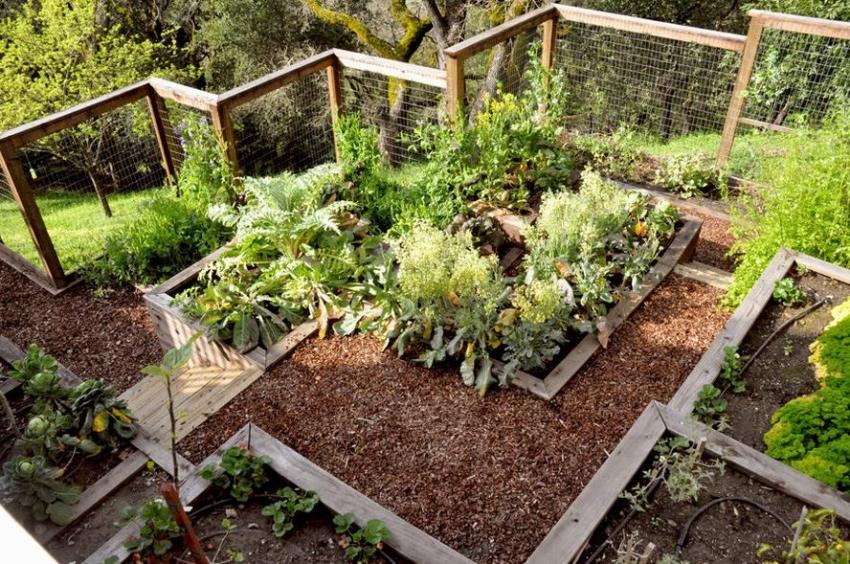 Крутой склон не помеха для удобного огорода, если соорудить грядки в виде ступенек