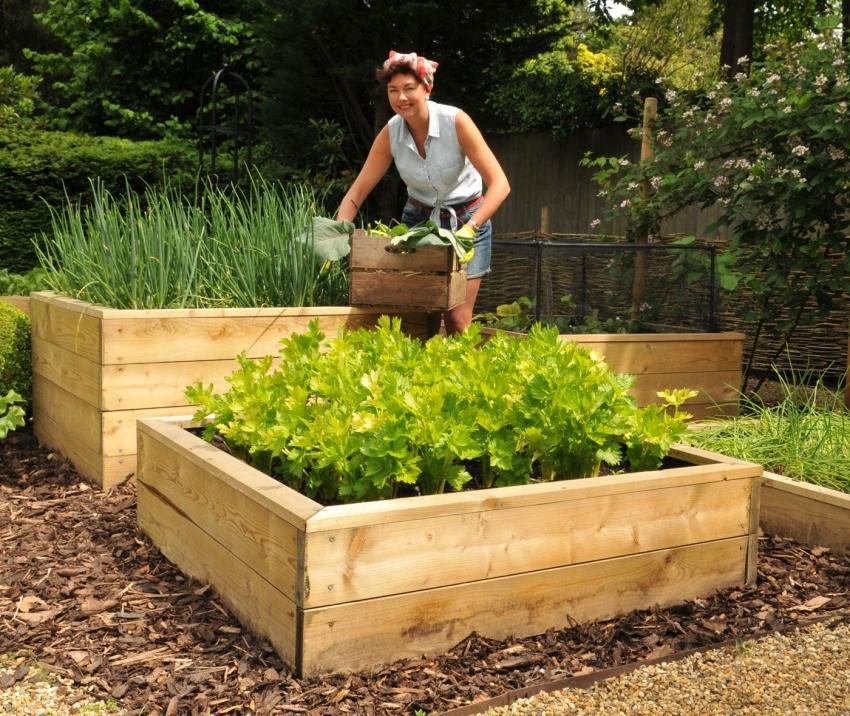 Перед посадкой овощных культур необходимо учесть будущую высоту растений, чтобы не создать затененные участки на грядках