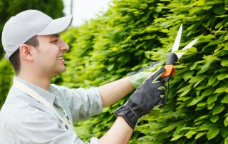 Многолетняя быстрорастущая живая изгородь: вечнозеленые растения и их описание