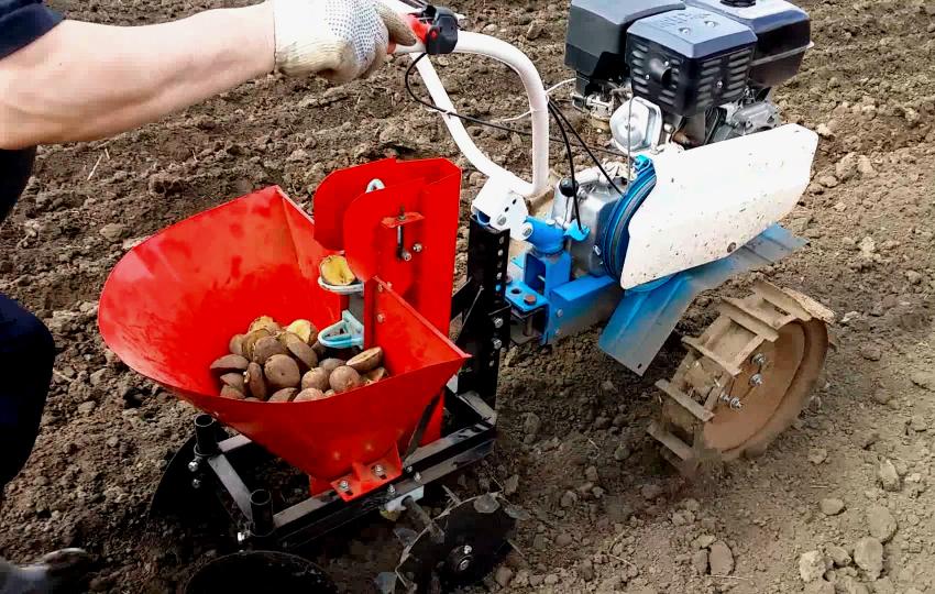 Мотоблоки серии Нева широко используются для посадки картофеля
