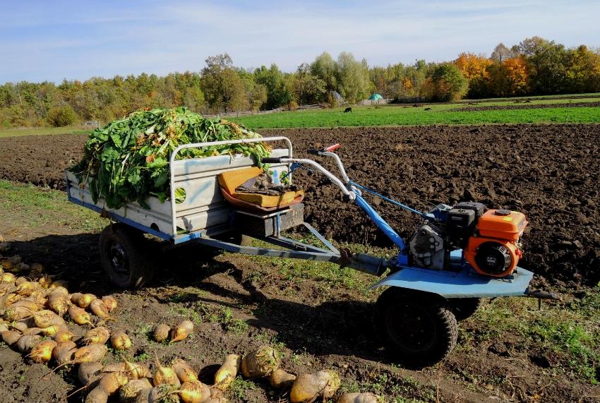 Мини-трактор удобно использовать для сбора урожая на больших участках