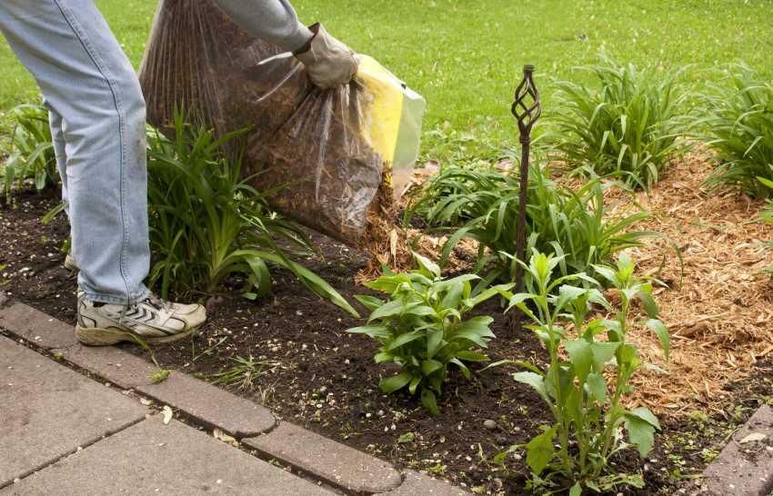 Щепа из измельченных веток может использоваться в качестве компоста для растений