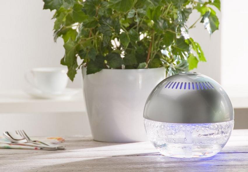 О том, что воздух в квартире сухой, подскажут начинающие подсыхать кончики листьев растений
