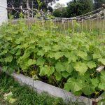 Грядки для ленивых: фото и рекомендации по созданию огорода