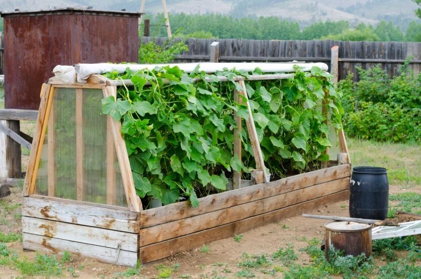 Из обычных высоких грядок можно соорудить мини-теплицы, которые помогают сохранить урожай при заморозках