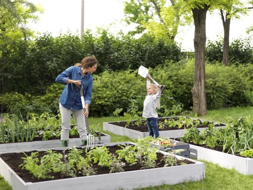 Аккуратные грядки позволят сделать огород более привлекательным и организованным