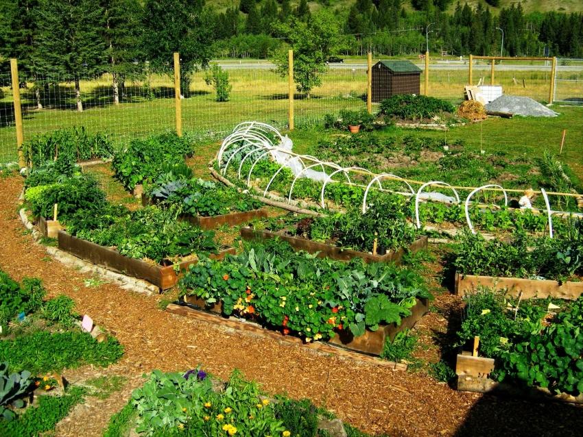 Легкий огород своими руками 40