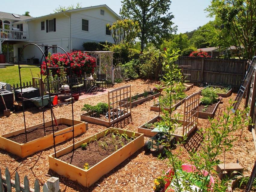 Как сделать сад из огорода 631