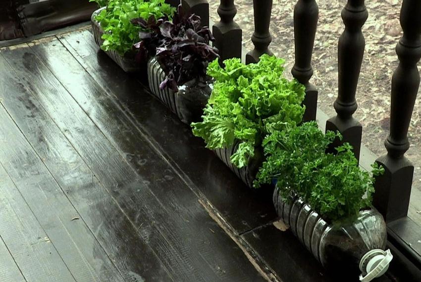 Однолетние растения можно выращивать в больших пластиковых бутылках и разместить в удобном для участка месте