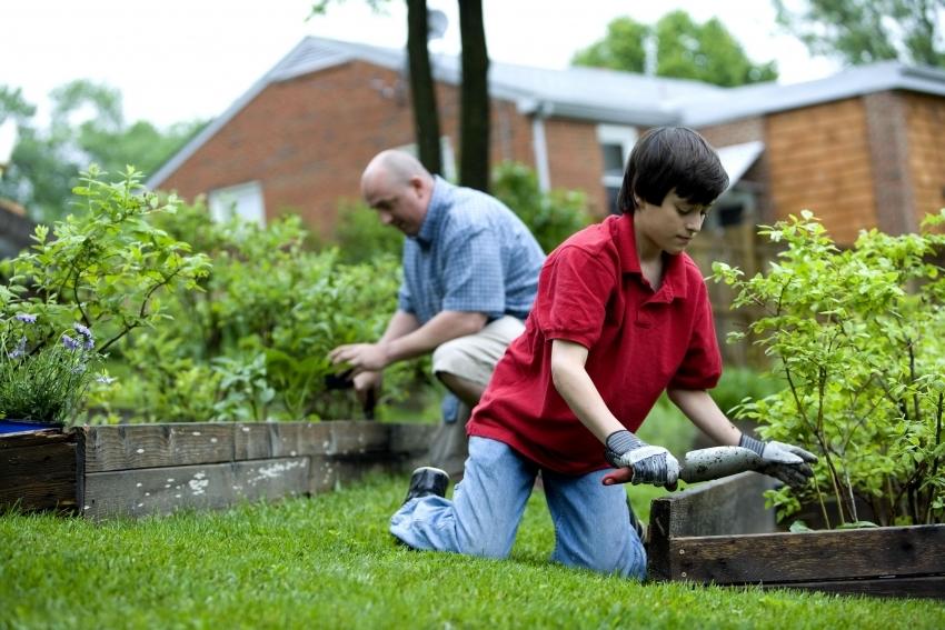 В деревянные грядки также можно высаживать кусты и небольшие плодовые деревья