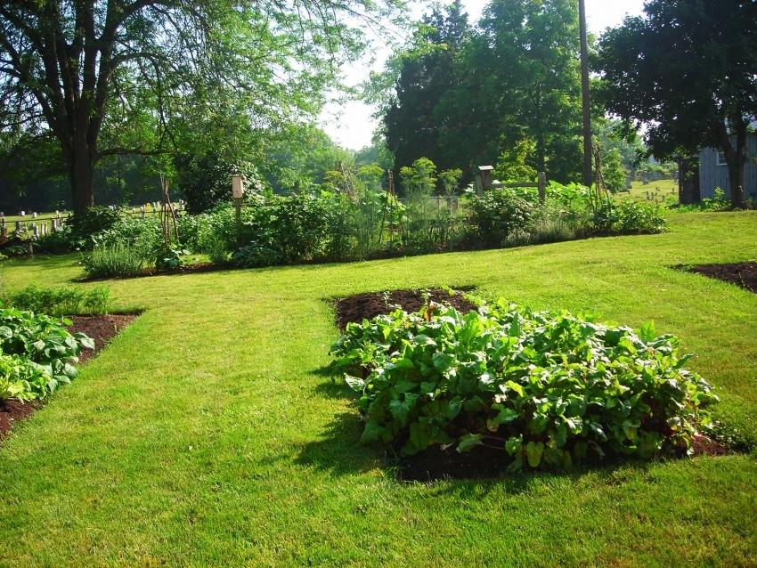 Тропинки можно засеять газонной травой, но при этом необходимо следить за четкими очертаниями грядок
