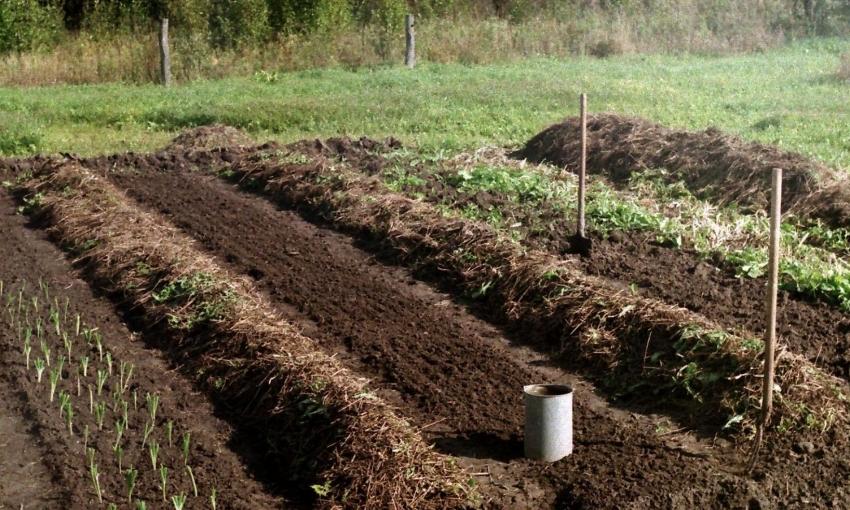 Многие садоводы отмечают удобность при работе с узкими грядками