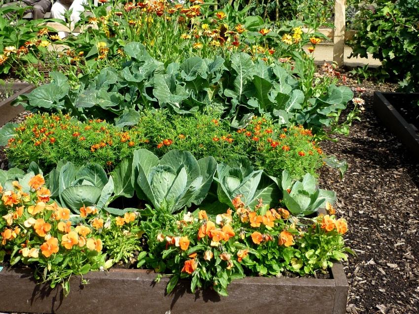 Какие овощи сажать в огороде 849