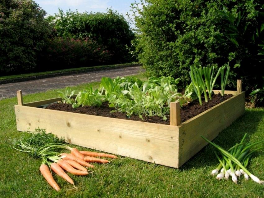 Лук и морковь - отличные соседи, поэтому их принято высаживать рядом