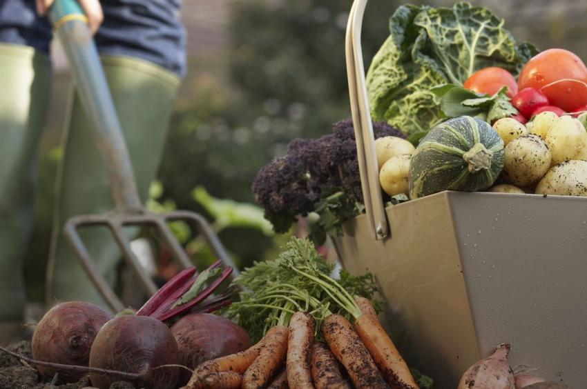 Правильное планирование рассадки овощных культур - залог богатого урожая