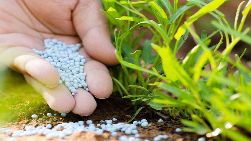 Почву, где росли огурцы, необходимо обязательно удобрить после сбора урожая