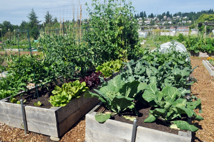 При закладке слоев в теплую грядку необходимо четко контролировать количество удобрений, чтобы не повысить допустимую температуру почвы для корневой системы растений