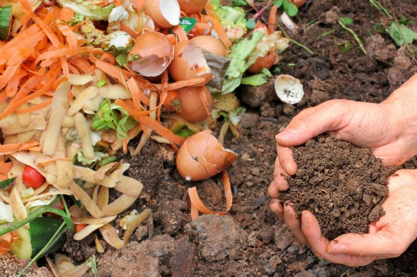 С помощью органических удобрений можно не только повысить качество овощных культур, но и обогатить почву полезными минералами
