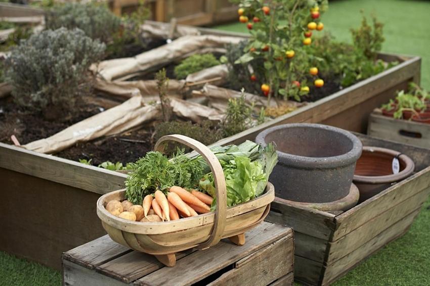 Используя методы Лядова, Митлайдера и принципы природного земледелия можно получать щедрый урожай несколько раз в год
