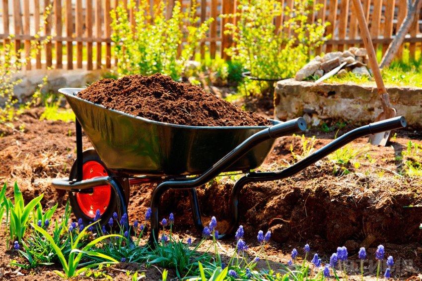 Если почва на участке не очень хорошего качества для грядок лучше использовать покупной грунт