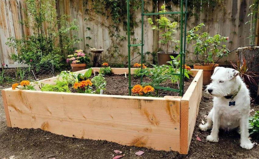 Для изготовления бортов приподнятого огорода может быть использован любой материал, но чаще всего применяются доски