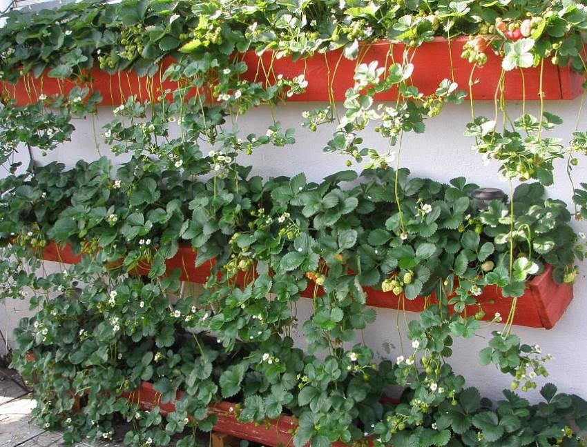 Вертикальные конструкции экономят пространство и подходят для выращивания цветов, клубники, зелени, овощей