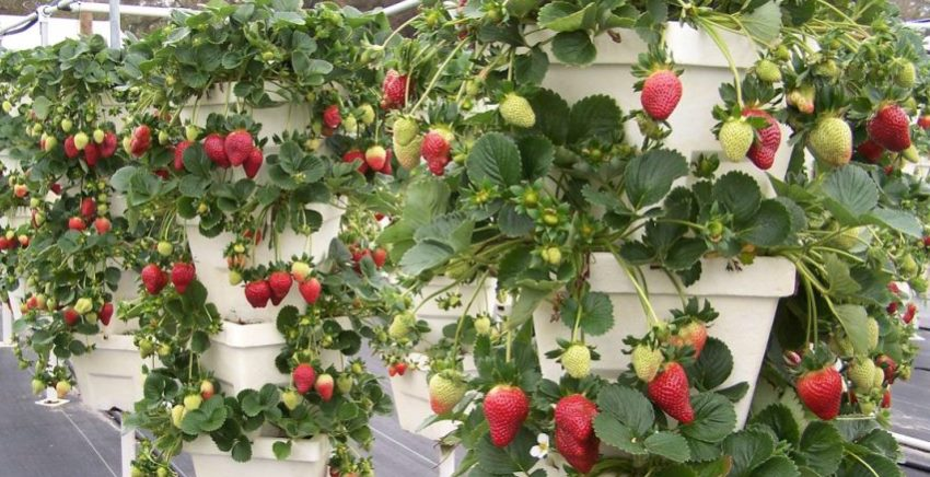 Сад с высоким грядками может выглядеть красиво, удобно и щедро отблагодарить урожаем