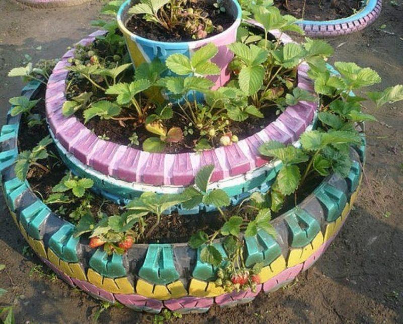 Выращивание клубники в колесах фото 87