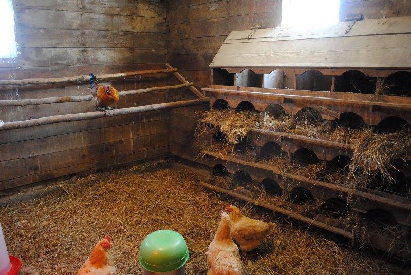 Как сделать курник в домашних условиях